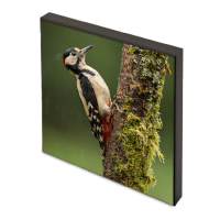 Greater Spotted Wood Pecker Photo Block FB_01_PB